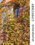 wall in colored leaves with... | Shutterstock . vector #1198923889