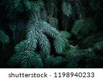 christmas  fir tree brunch... | Shutterstock . vector #1198940233