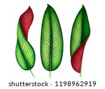 set of watercolor tropical... | Shutterstock . vector #1198962919
