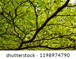 under view of ivory coast... | Shutterstock . vector #1198974790