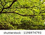 under view of ivory coast... | Shutterstock . vector #1198974793