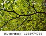 under view of ivory coast... | Shutterstock . vector #1198974796