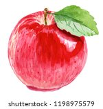 Apple Illustration. Watercolor...