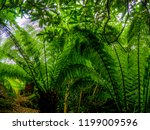 green fern leaves in a close up ... | Shutterstock . vector #1199009596