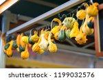 different pumpkins on city... | Shutterstock . vector #1199032576