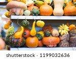 different pumpkins on city... | Shutterstock . vector #1199032636