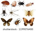 set of bug and insect... | Shutterstock .eps vector #1199076400
