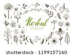 herbal tea and floral doodle... | Shutterstock .eps vector #1199157160