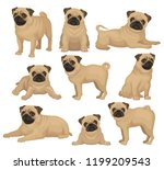 flat vector set of pug puppy in ... | Shutterstock .eps vector #1199209543