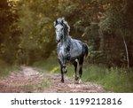 arabian stallion running free... | Shutterstock . vector #1199212816