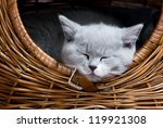Stock photo cute kitten sleeping in a basket 119921308