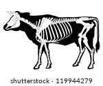 Cow Skeleton With Siluette
