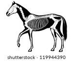horse skeleton | Shutterstock .eps vector #119944390