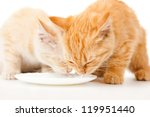 Stock photo two kitten milk from a saucer of varnish 119951440
