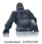 Silverback Gorilla Sitting...