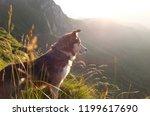 shepherd dog looking towards... | Shutterstock . vector #1199617690