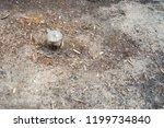 illegal deforestation  felled... | Shutterstock . vector #1199734840