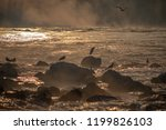 birds on a river in the morning | Shutterstock . vector #1199826103