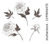 set of vector hand drawn...   Shutterstock .eps vector #1199846470