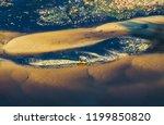 okavango delta  okavango...   Shutterstock . vector #1199850820
