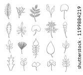 types of leaf. outline leaves... | Shutterstock .eps vector #1199884219