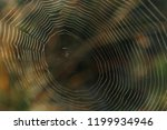 big cowweb among blades in... | Shutterstock . vector #1199934946