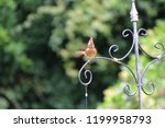 female northern cardinal... | Shutterstock . vector #1199958793