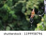 female northern cardinal... | Shutterstock . vector #1199958796