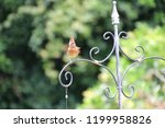 female northern cardinal... | Shutterstock . vector #1199958826