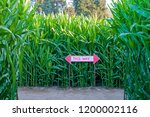 Corn Maze With Directional Sign