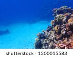 coral reef in egypt with color... | Shutterstock . vector #1200015583