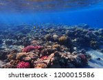 coral reef in egypt with color... | Shutterstock . vector #1200015586