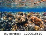 coral reef in egypt with color... | Shutterstock . vector #1200015610