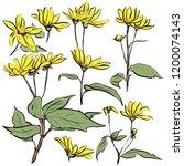 botanical decorative...   Shutterstock . vector #1200074143