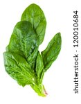Spinach Leaves Isolated On...