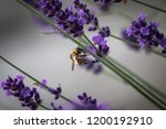 bumble bee and lavender story | Shutterstock . vector #1200192910
