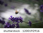 bumble bee and lavender story | Shutterstock . vector #1200192916