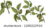 green almond in a vector style... | Shutterstock .eps vector #1200222910