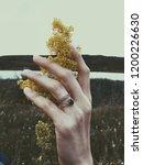 hand embracing yellow flower on ... | Shutterstock . vector #1200226630