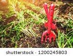 vegetable cultivation kitchen...   Shutterstock . vector #1200245803
