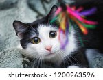 young cat plays. | Shutterstock . vector #1200263596