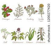 colored set of medicinal plants.... | Shutterstock .eps vector #1200277420