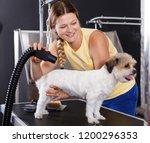 nice female groomer performing... | Shutterstock . vector #1200296353