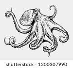 sketch octopus. hand drawn... | Shutterstock .eps vector #1200307990