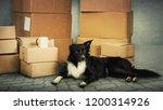 home moving concept as border...   Shutterstock . vector #1200314926
