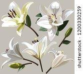 white flowers of lily on light... | Shutterstock .eps vector #1200330259