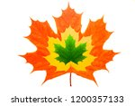 maple leaf isolated on white... | Shutterstock . vector #1200357133