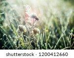 grass is frozen in ice crystals ... | Shutterstock . vector #1200412660