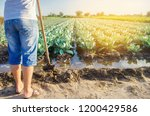 the farmer is watering the... | Shutterstock . vector #1200429586