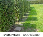 shadows of square shaped shrubs ... | Shutterstock . vector #1200437800